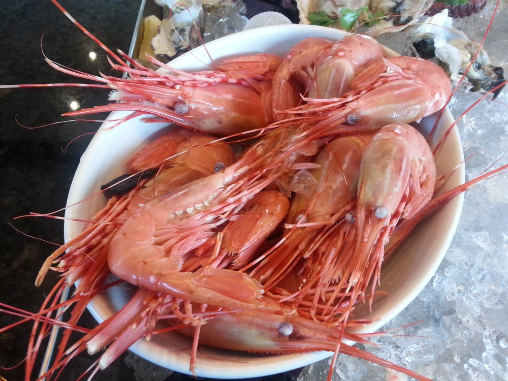 ARC Launch - Spotted Prawns