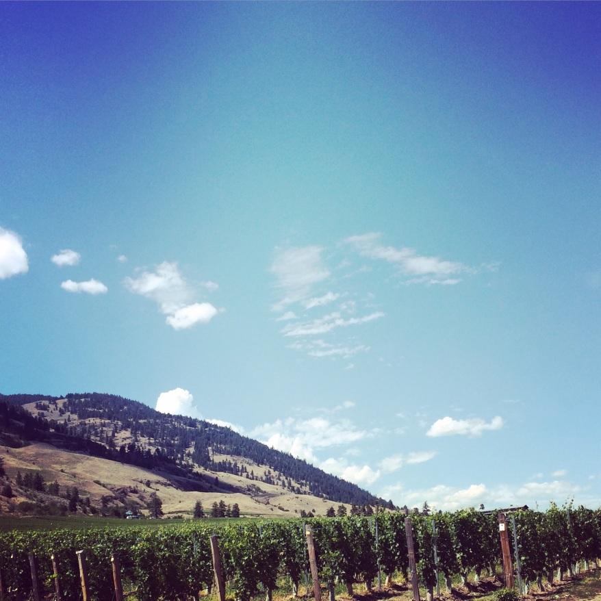 Winery Osyoos Yoga Retreat