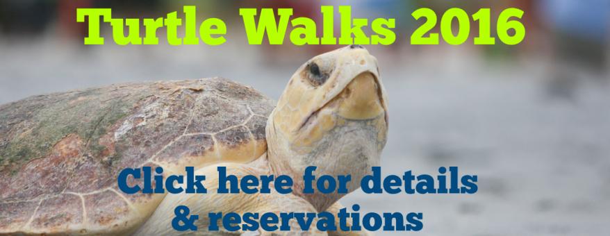 turtle_walk_web_banner_2016_dist_KTSSJDKK