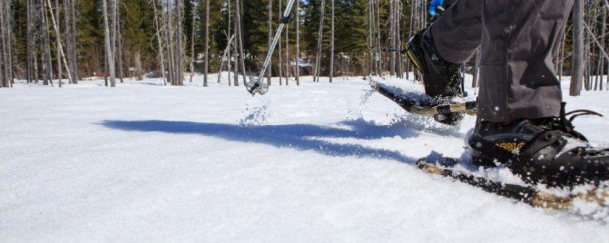 golden-bc-activities-snowshoeing-8